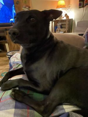 You can fill out an adoption application online on our official websiteBalto TX is a male mixed b