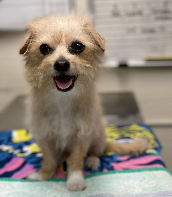Dayzee, an adopted Terrier Mix in Los Alamitos, CA