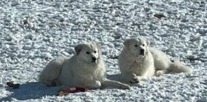 Snowball & Hunter