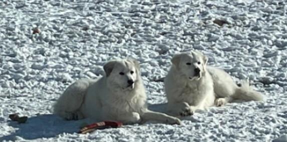 Snowball & Hunter 1
