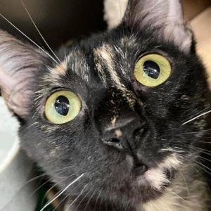 fromferaltofabulous Since being in a foster home Whisk has really come out of her shell She loves