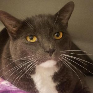 This very handsome 6-year old boy is Sears He has a very calm and relaxed perso
