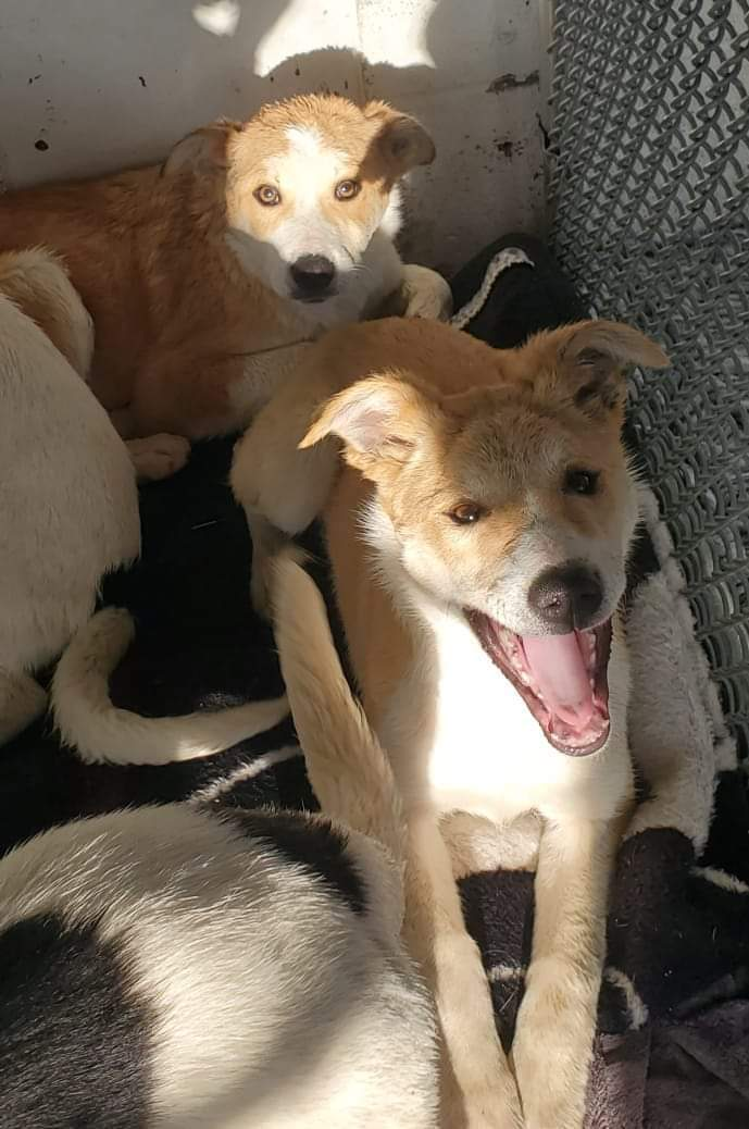 AJ, an adoptable Mixed Breed in Cape Girardeau, MO