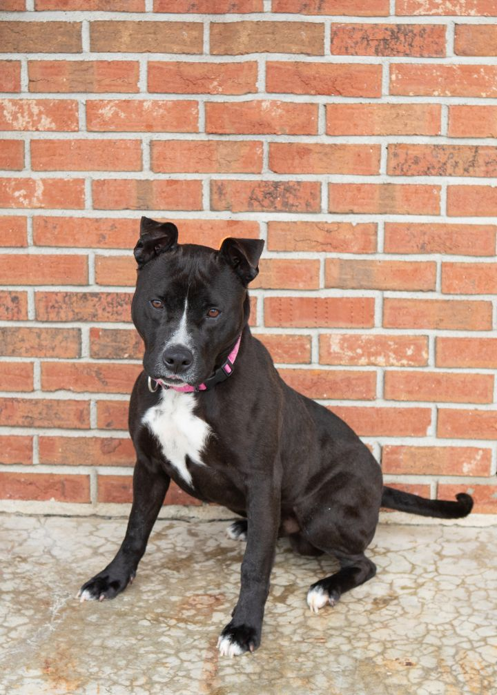 ZEUS, an adopted Mixed Breed in Cape Girardeau, MO