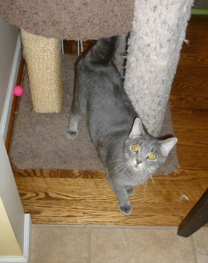 Juneau - special home needed 2