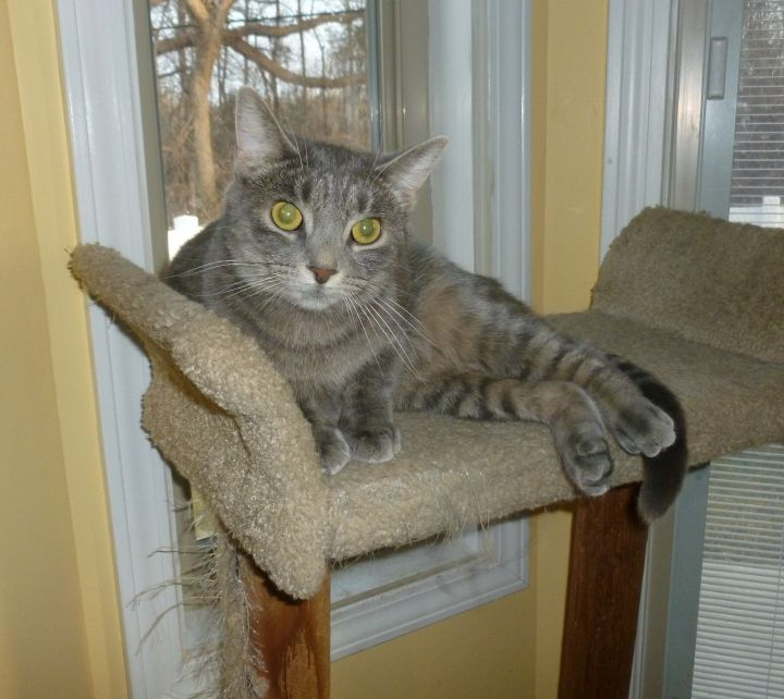 Juneau - special home needed 4