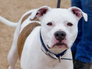 Coby is a handsome guy that is loyal and loving with his person He prefers adult humans and would m
