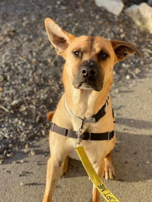 1 year old Spike This big boy like to play play play Looking for a great family to train and