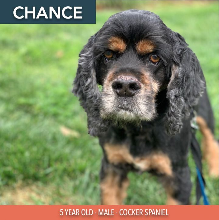 Chance 2