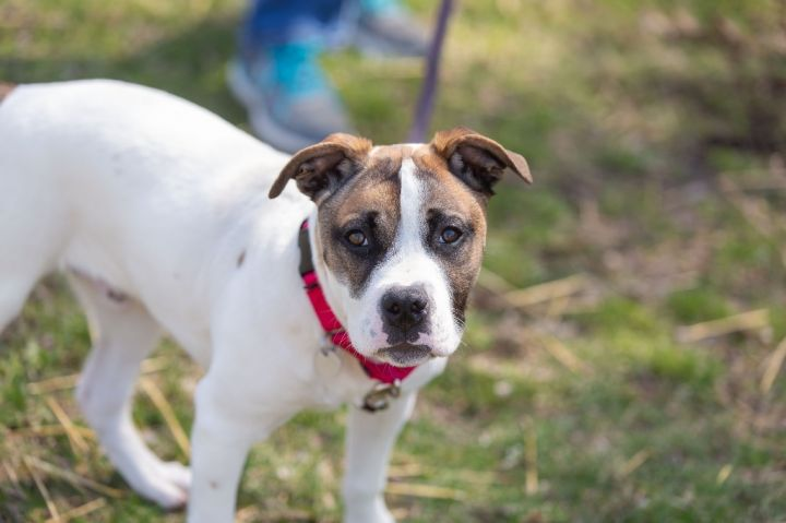 Andrew, an adoptable Mixed Breed in Dearborn, MI