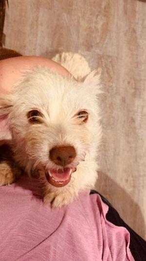 Jiggles Terrier Dog