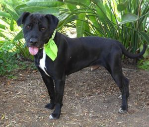 REXFORD Mixed Breed Dog