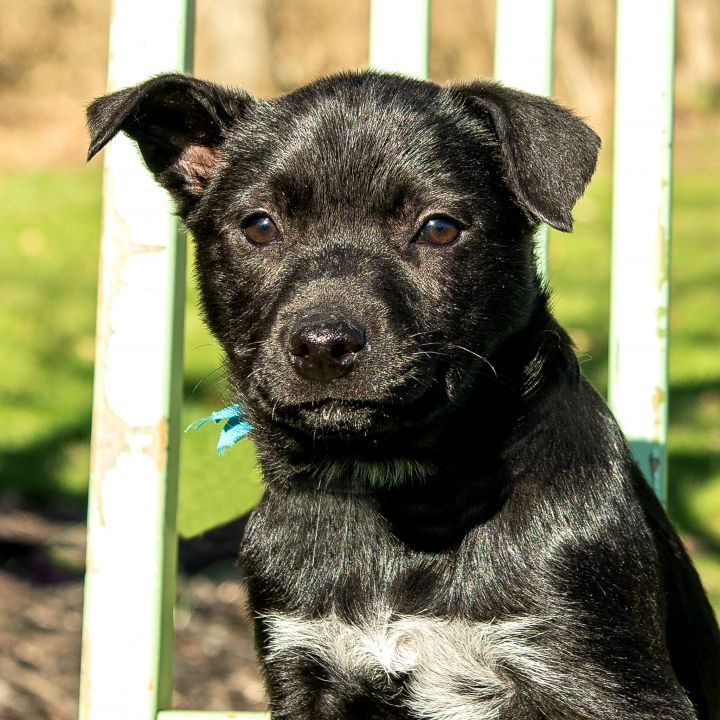Polar Bear, an adopted Border Collie & Retriever Mix in Cincinnati, OH
