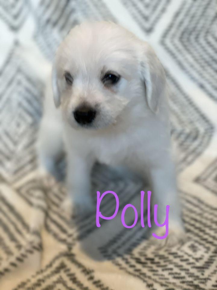 Polly 1