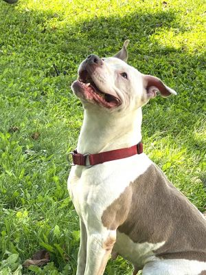 Linda is about three years old She is a quiet gentle dog with humans but would like to be your