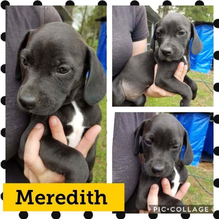 Meredith 1