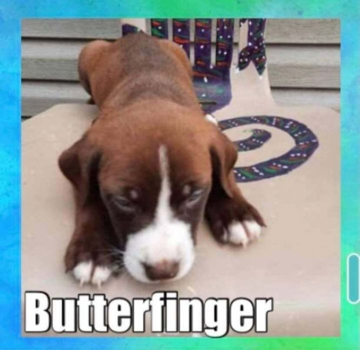 Butterfinger 1