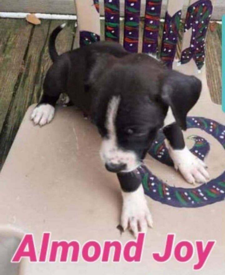 Almond Joy 1