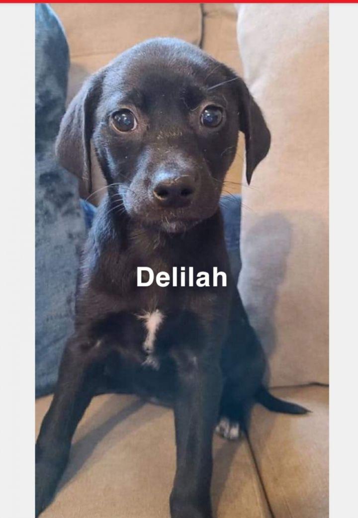 Delilah 1