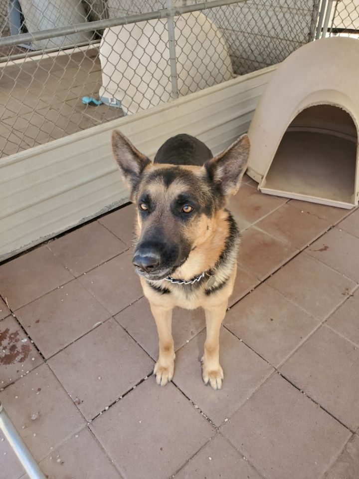 Angus Lee NEEDS A FOSTER 2