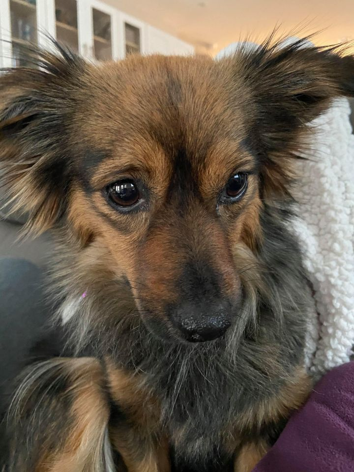 Sophia (looking for a foster) 2