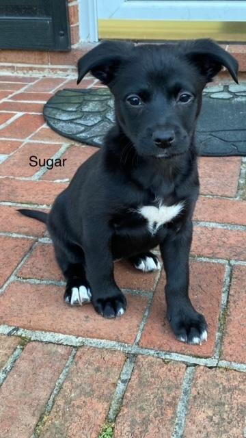 Sugar 1