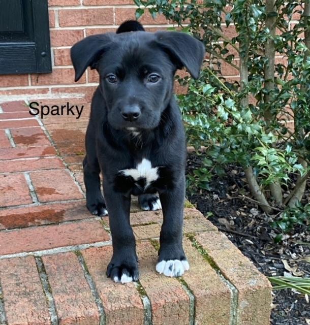 Sparky 1