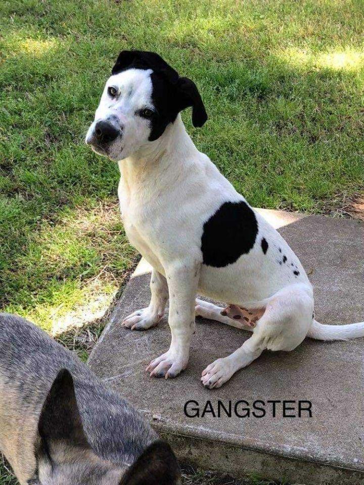 Gangster 3