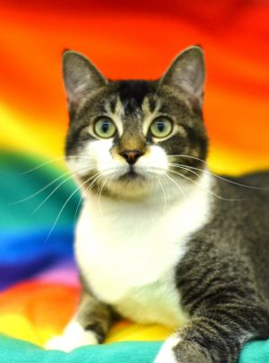 Emily is a playful adorable and affectionate 1 year old She gets along well with other cats She i