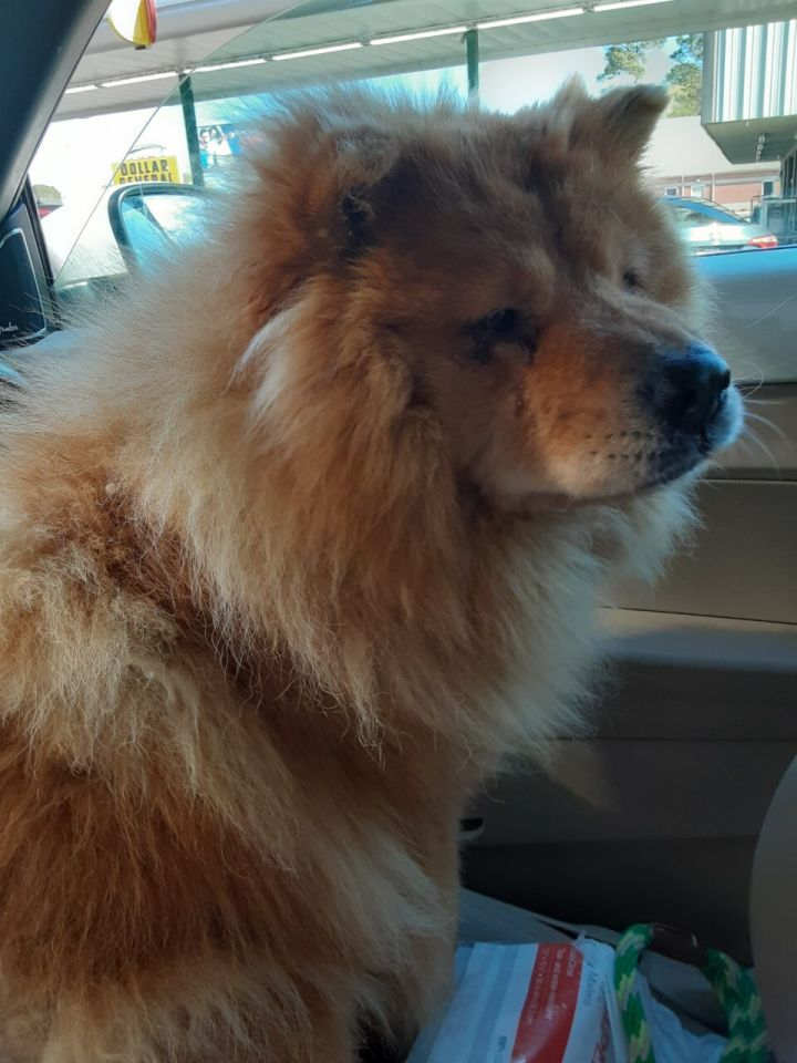 Pixie adoption pending! 1