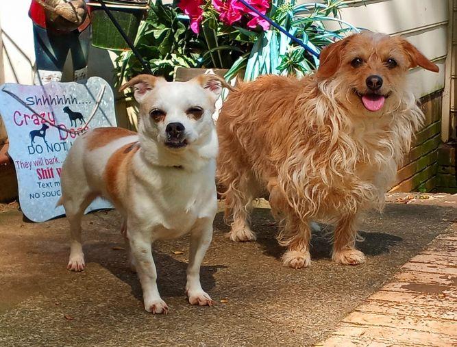 Sophie and Sasha
