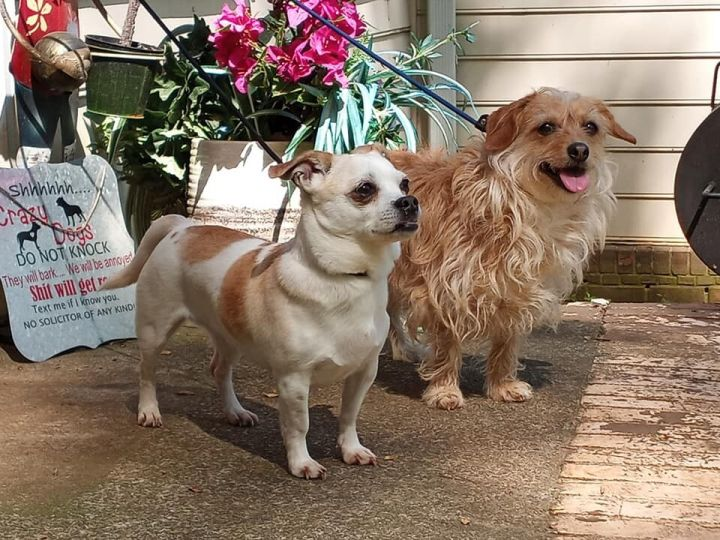 Sophie and Sasha 2