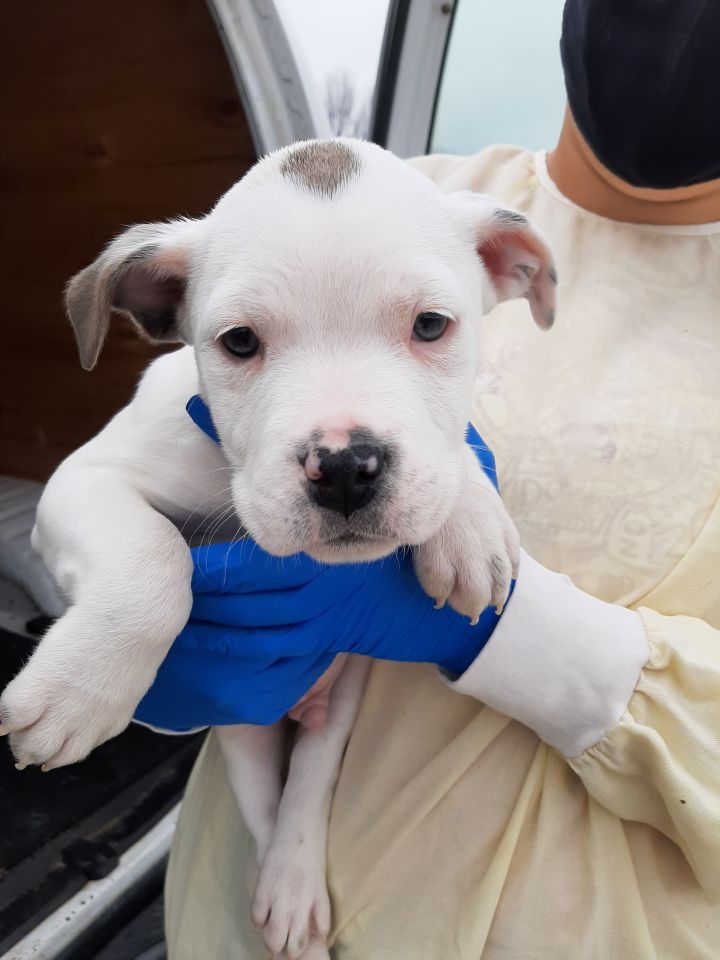 Miyagi, an adoptable Terrier Mix in Lake Odessa, MI
