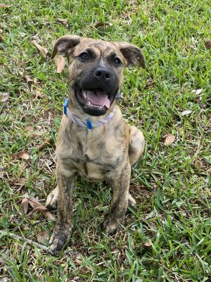 Someone dumped this handsome fella and we cant figure out why He is great with other dogs and kids