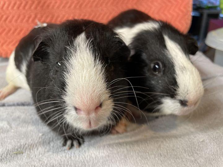 Skunk & Oreo 3