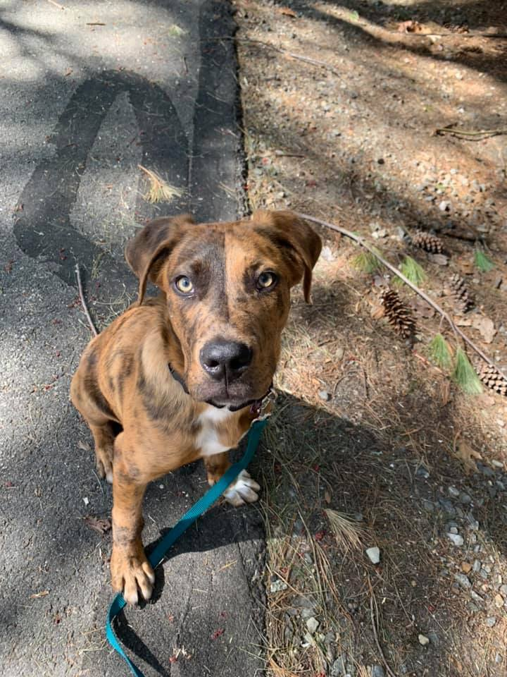 Cole *HERE IN NH*, an adoptable Mixed Breed in Northwood, NH
