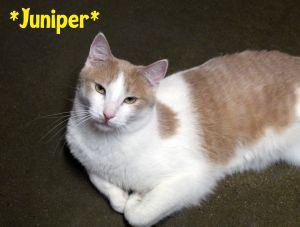 Juniper (Bonded w/Rezz)