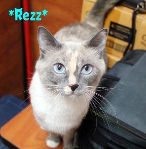 Rezz (Bonded w/Juniper)