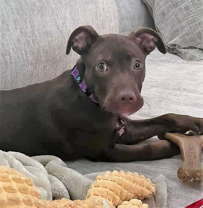 Christine *HERE IN NH*, an adoptable Mixed Breed in Northwood, NH