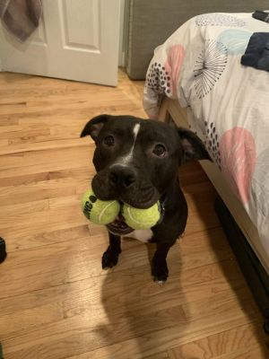 Kylo aka Kylo Bubba aka Bubba-boy is an estimated 5-year old 65lb pittie mix overflowing with lov