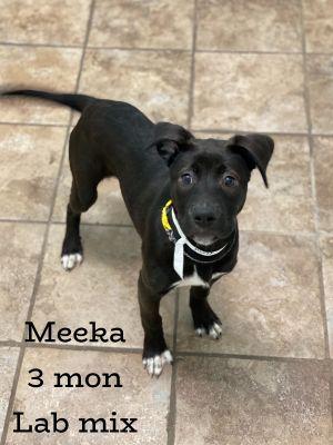 Meeka
