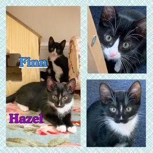 Hazel and Finn