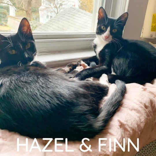 Hazel and Finn 4