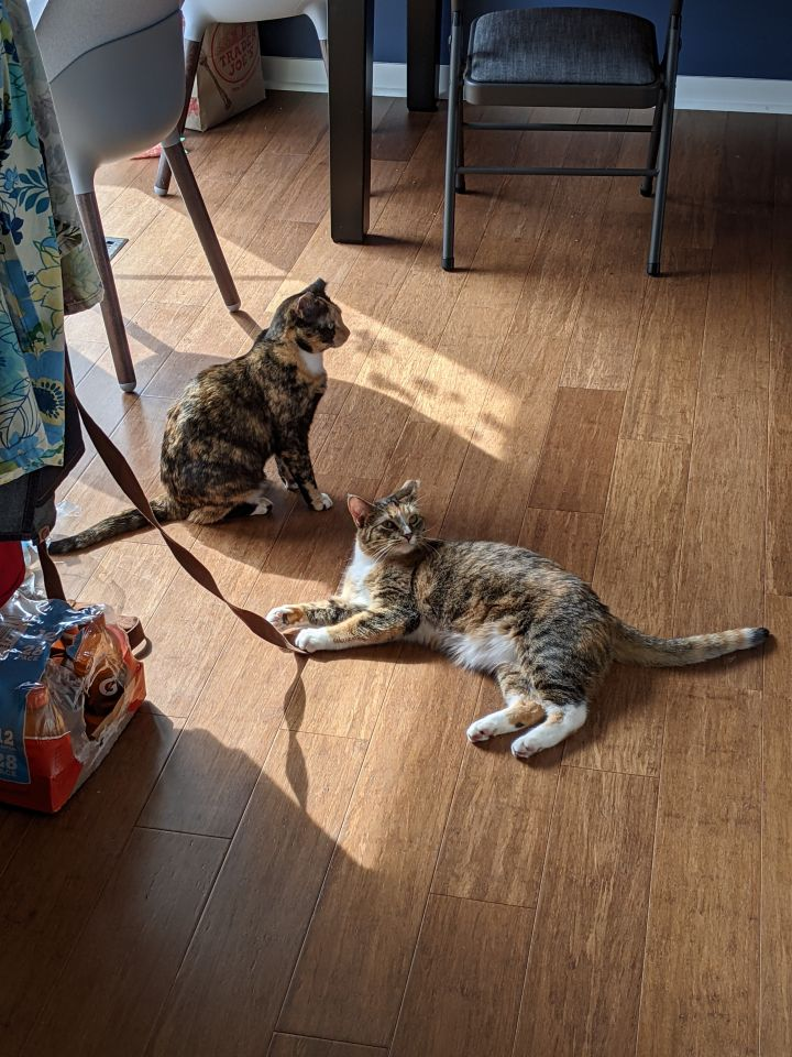 Amber & Mia (Bonded Pair) - Pending Adoption 1