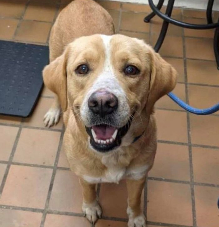 Rosalee, an adopted Labrador Retriever Mix in Danbury, CT_image-1