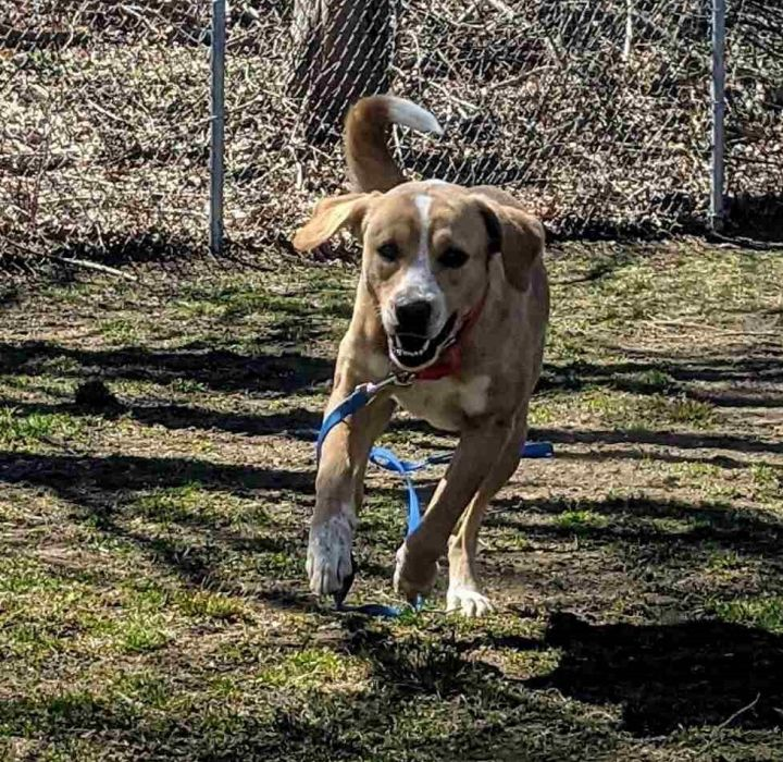 Rosalee, an adopted Labrador Retriever Mix in Danbury, CT_image-4