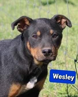 Wesley 1