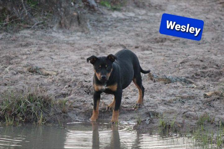Wesley 2