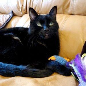 ?bust=1618935093&width=300 - Adopt a Cat