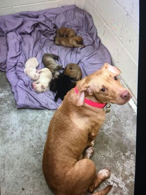 Mom with 5 day old pups needs a safe place